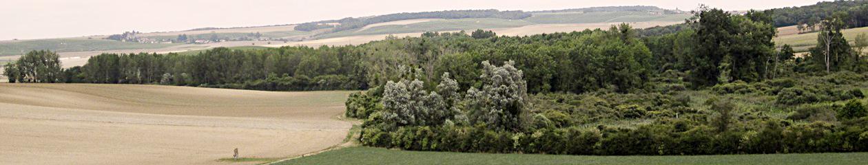 Le Néolithique de la région des marais de  Saint-Gond (Marne)